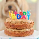 Dog Birthday Cake Recipe For Your Furry Friend – Recipes Cakes For Dogs