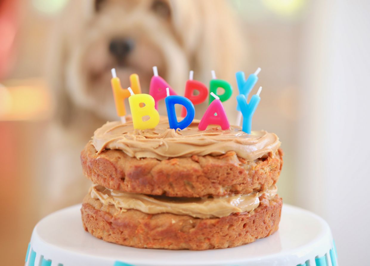 Dog Birthday Cake Recipe For Your Furry Friend - Recipes Cakes For Dogs