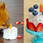 How To Make A Birthday Cake FOR DOGS | PADDINGTON'S PANTRY | RECIPE – Recipes Cake For Dogs